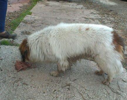 Foto de perro en Utrillas