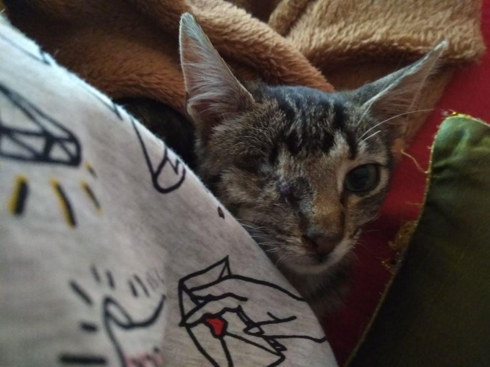 Foto de Juno