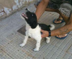 Foto de Perro en Calamocha