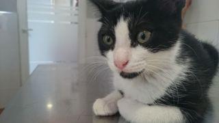 Foto de Kitty